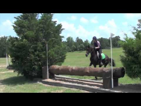 Morgan Horse, All Around Sport Horse for Sale