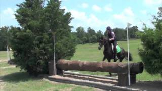 Morgan Horse, All Around Sport Horse for Sale Thumbnail
