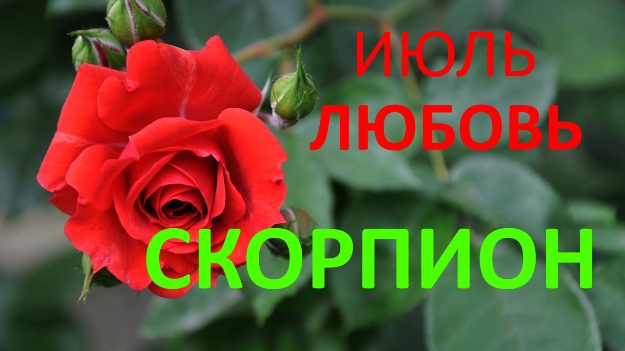 СКОРПИОН. САМЫЙ ПОДРОБНЫЙ ЛЮБОВНЫЙ ГОРОСКОП. ИЮЛЬ 2019г.