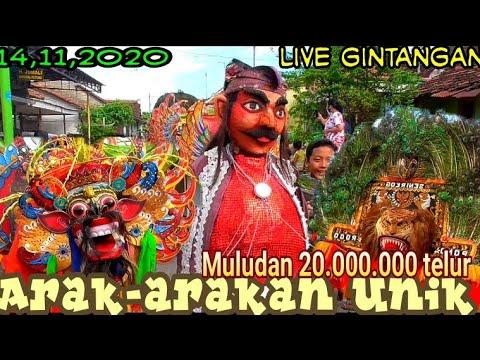 Arak-arakan 20.000 Kembang NDog Full Barong Reog Live Gintangan
