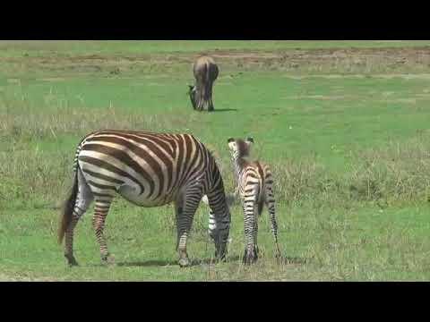 ENDUIMET Wildlife Management Area Tanzania