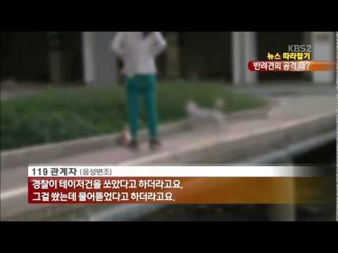[뉴스 따라잡기] 주인도 속수무책…사람 잡은 진돗개