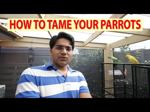 How to tame your Parrots / Birds