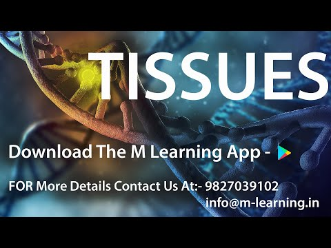 Tissues: What are Tissues?, Difference Between Plant & Animal Tissue - 01 For Class 9th and NTSE