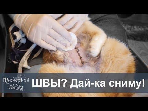 Чем кормить кошку после операции: важные особенности