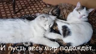 #36 Последние новости: Лапусик, Артик, Беркут, Дружок. Коты после кастрации