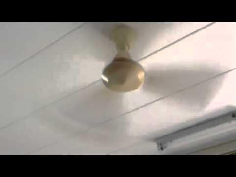 ว่างจัด เขย่าหมีบนพัดลมเพดาน