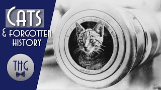 History and Housecats, a tale of Civilization