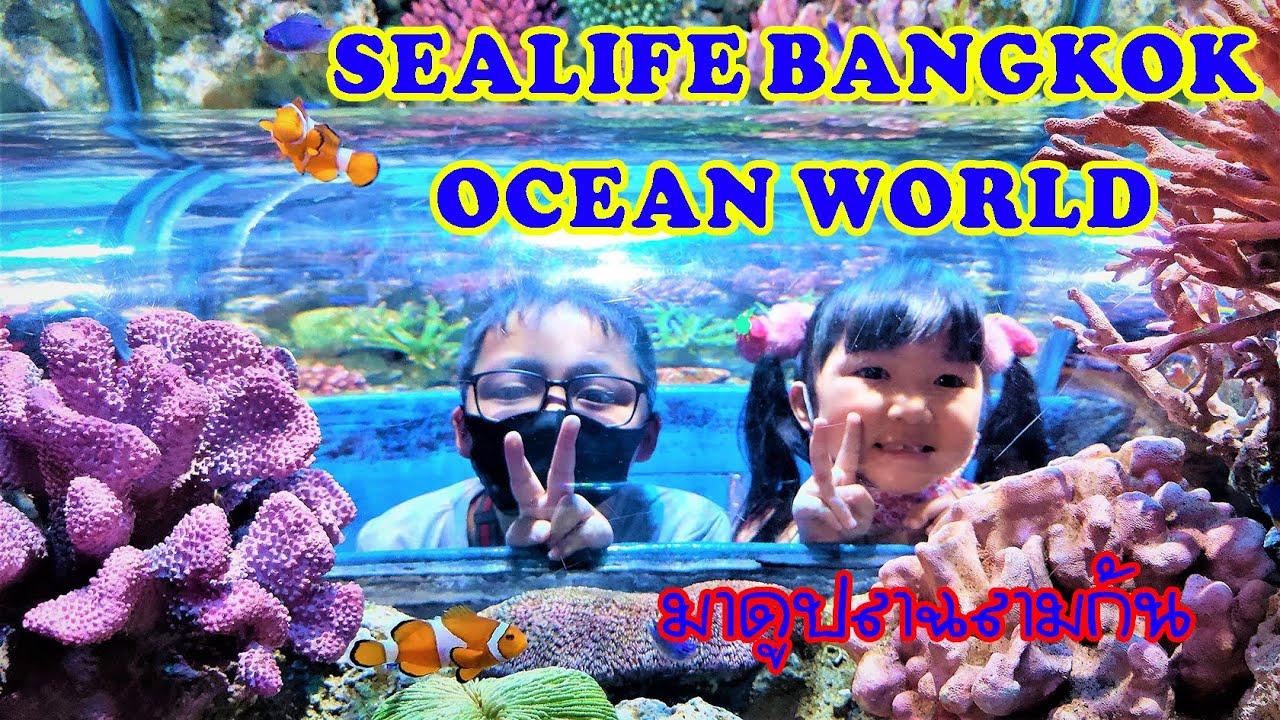 Sea life Bangkok Ocean World พาดารินดา ดาก้อน มาดูสัตว์ทะเลกันค่ะ  family activity  siam paragon