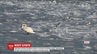 Крижана казка по одеськи  затоку знову скувало льодом