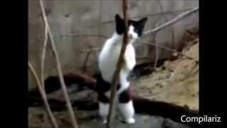 Танцующие кошки и коты, подборка под музыку