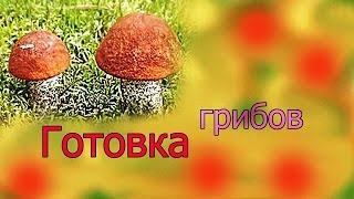 Готовка грибов: зонтики, трубчатые, опята. Заготовка на зиму.