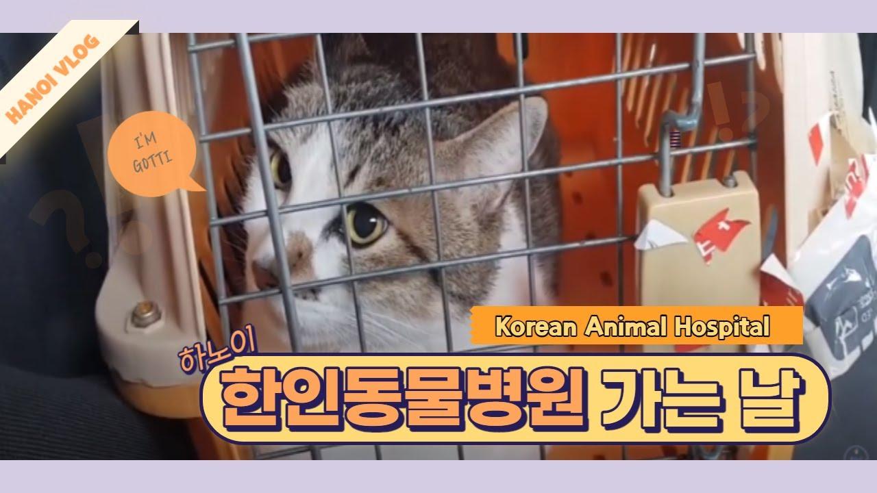 베트남 하노이 한인 동물병원 다녀왔어요:)