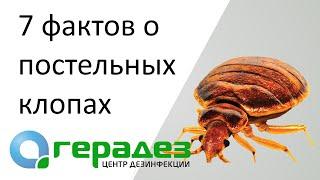 видео Вызвать Дезинфекция Помещений От Клопов Воронеж