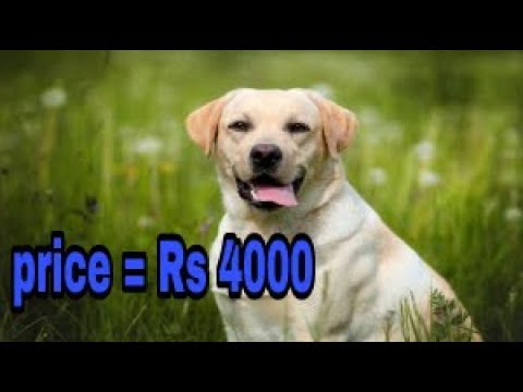 Popular dogs price in india with contact no.