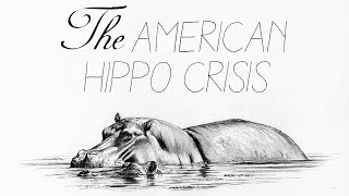 How America Was Almost Overrun By Hippos