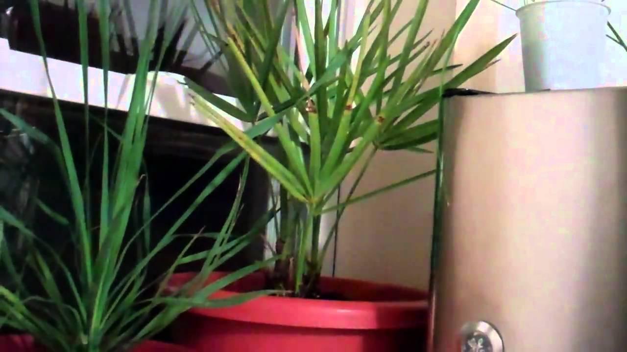 Indoor hardy tropical plants youtube - Hardy houseplants ...