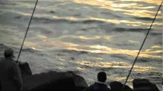 Video PEIXES NA PÓVOA DE VARZIM PORTUGAL CAMPIONATO DE PESCA download MP3, 3GP, MP4, WEBM, AVI, FLV Desember 2017