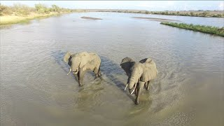 Amazing Selous by Drone - African Wildlife Aerial Video in 4K(Amazing aerial video footage of african wildlife filmed by drone. Filmed on a DJI Phantom 3 Professional at the Azura Retreats Lodge in the Selous Game ..., 2016-02-03T04:04:54.000Z)