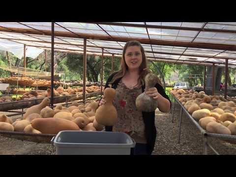 How to Clean a Gourd - Welburn Gourd Farm
