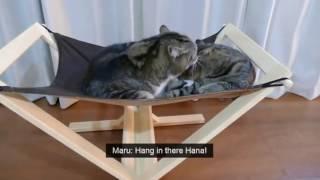 Японские коты прикол.