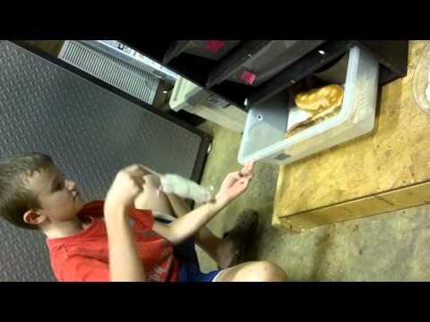 Kid Feeds 10 Pound Blood Python By Hand