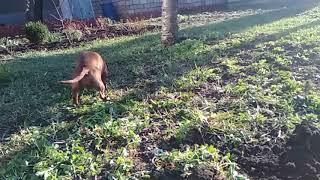 Собака травка ед
