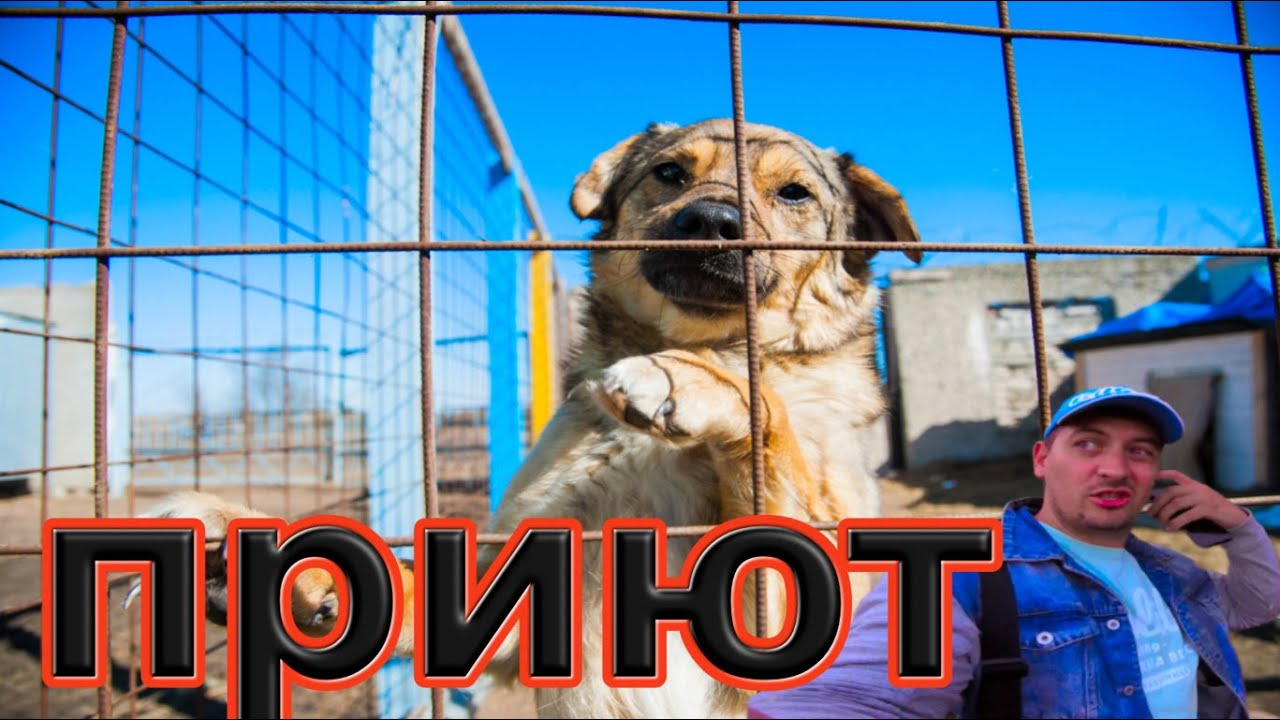 День добрых дел, покормили собак, приют бездомных животных