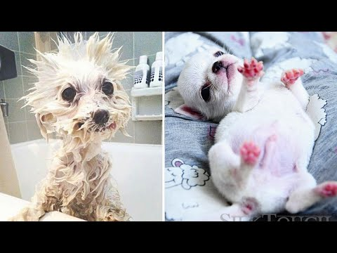 Cute Dog – Cute baby animals Videos Compilation cutest moment of the animals #1