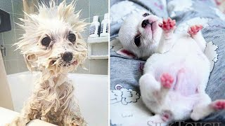 Cute Dog - Cute baby animals Videos Compilation cutest moment of the animals #1