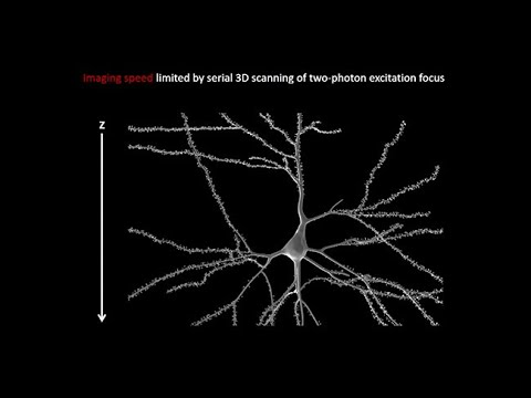 Kavli Institute for Brain and Mind: Imaging the Brain - Ji