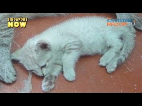 Extreme abuse cases (Animal Cruelty Pt 3)