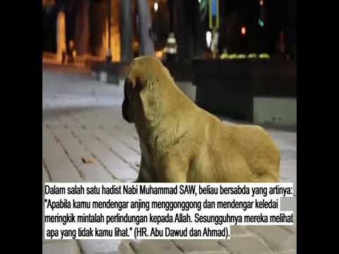Bila Mendengar Anjing Menggonggong • RisalahMuslim