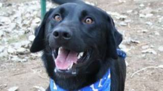 *adopted* Ollie Dog Adoption Boulder Humane Society Colorado