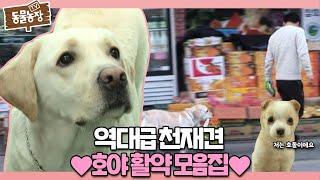 역대급 천재犬 '호야'의 놀라운 활약 모음집♥ I TV동물농장 (Animal Farm)   SBS Story