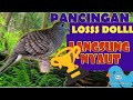 Perkutut Juara Dijamin Langsung Bunyi  Mp3 - Mp4 Download