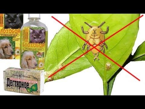 Щитовка на растениях ❦ мой простой способ борьбы со щитовкой ❦ помогло с первого раза