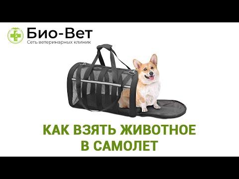 Как взять животное в самолет. Несколько важных правил перевозки собаки в самолете