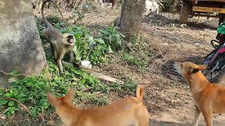 Animals Awesome moments are very intresting