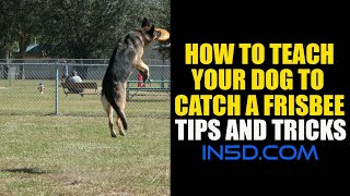 How To Teach Your Dog To Catch A Frisbee - Tips And Tricks - In5d.com