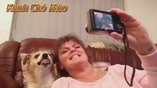 Top những chú chó dễ thương - Những chú chó hài hước nhất