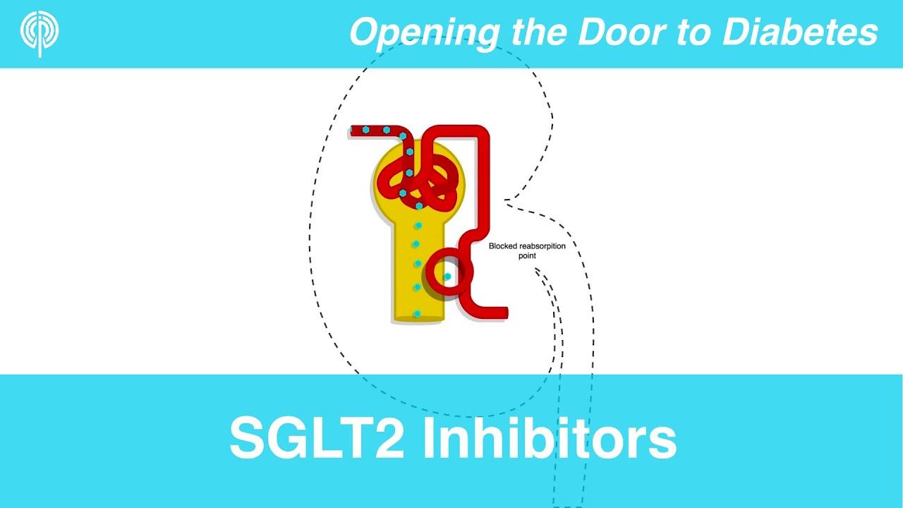 Fogyás sglt2 inhibitorok