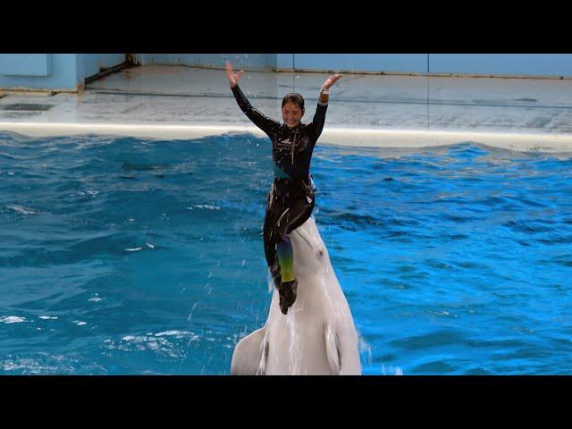 White Dolphin Show At Yokohama Hakkeijima Sea Paradise 【4K】