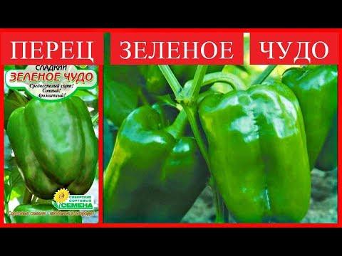 ЗЕЛЕНОЕ ЧУДО* ПЕРЕЦ КРУПНЫЙ, УРОЖАЙНЫЙ. РЕКОМЕНДУЮ К ПОСАДКЕ | болгарские | урожайные | сладкие | рассада | зеленое | урожая | семена | перцев | лучшие | сорта