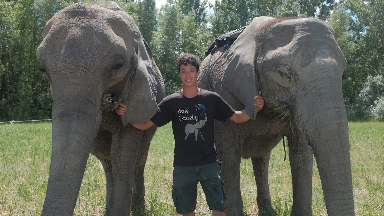 20-Year-Old Acrobat Performs Tricks With His Elephant Family | BEAST BUDDIES
