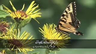 Persian Poem | Har Aan