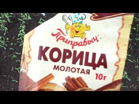 БОРЬБА С МУРАВЬЯМИ ПО ВАШИМ СОВЕТАМ. Ольга Чернова.