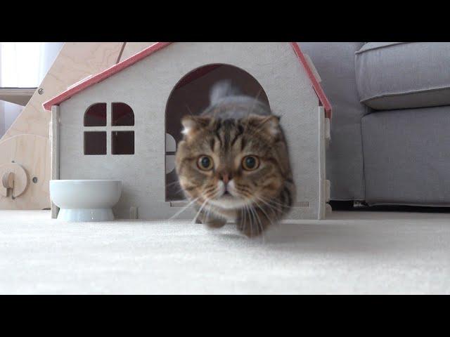 진짜 독한 고양이 루루