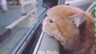 Gambar cover Kucing dilan dilanda kerinduan yang mendalam - Status WhatsApp