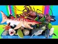 Shark Toy Collection Whales Fish Lobster Sea Animals Educational Toys for Children Kids Learning